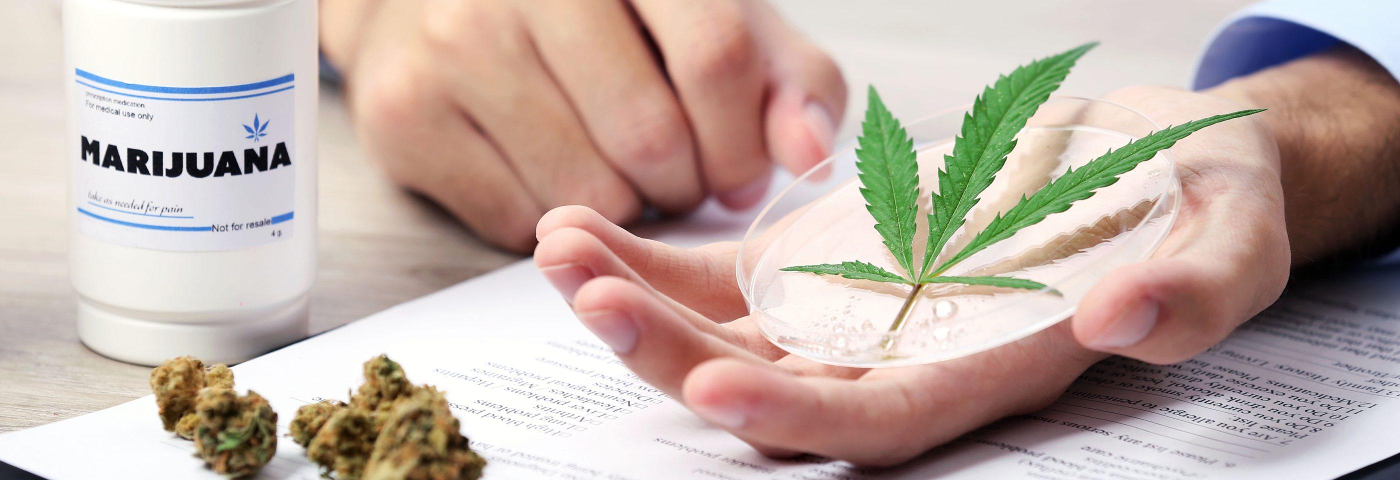 Kannabisszal a betegségek ellen