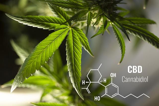 Kannabisz vs. CBD olaj: mi a különbség?